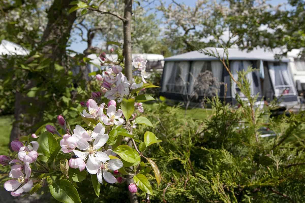 Mooie bloemen op de camping
